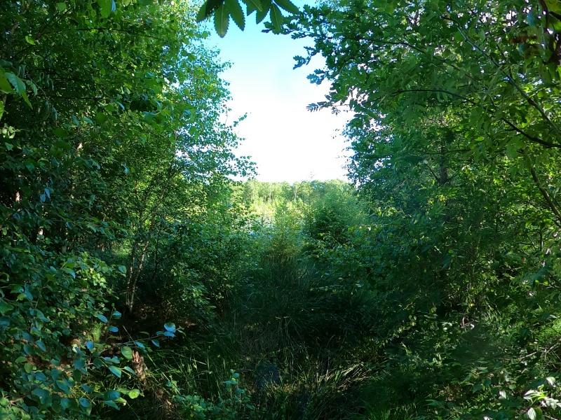 Mehrtägige Wandertour Moor